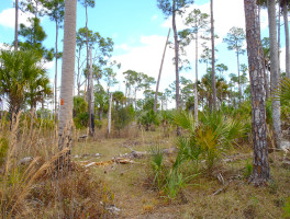 Florida Trail, Ocean to Lake: DuPuis Reserve