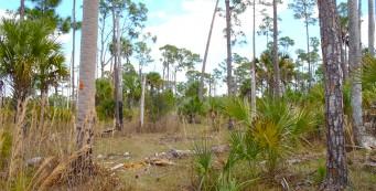 Dupuis Reserve
