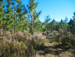 Florida Trail, Pruitt to Ross Prairie
