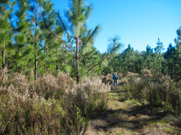 Florida Trail, Pruitt to Ross Prairie