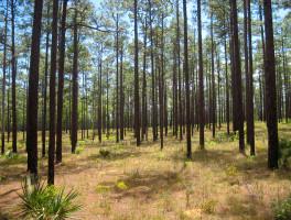 Florida Trail, Rodman to Lake Delancy