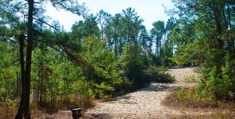 Florida Trail, SW 49th Ave to Land Bridge Trailhead