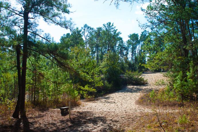 Florida Trail, SW 49th Ave to Land Bridge Trailhead
