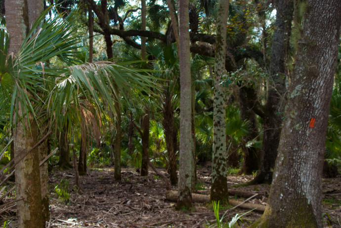 Florida Trail, Seminole Ranch