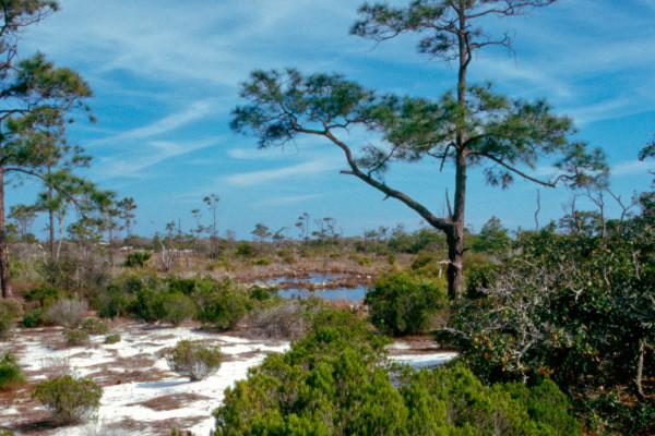UWF Dunes Preserve