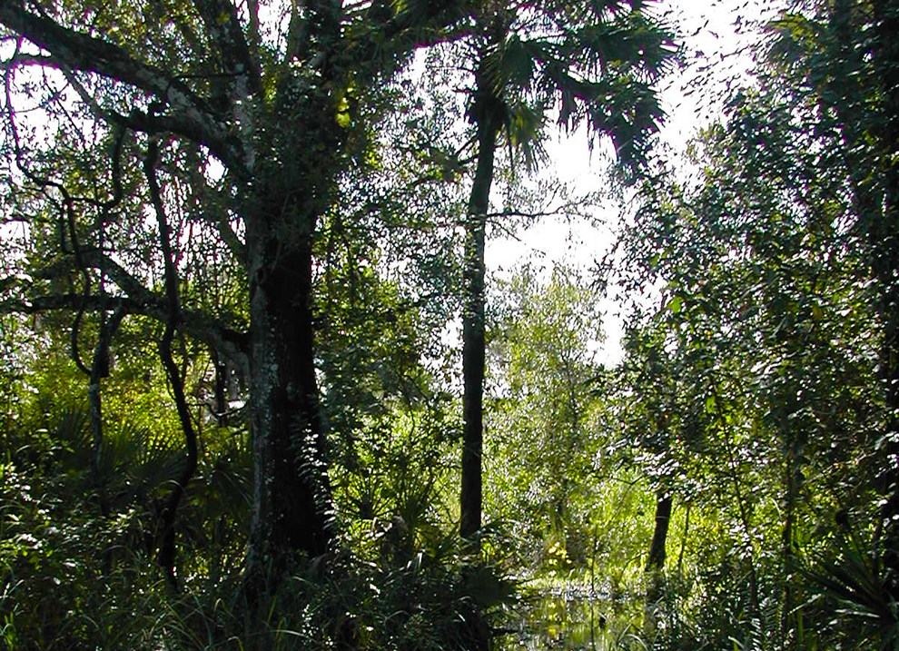 Florida Panther NWR