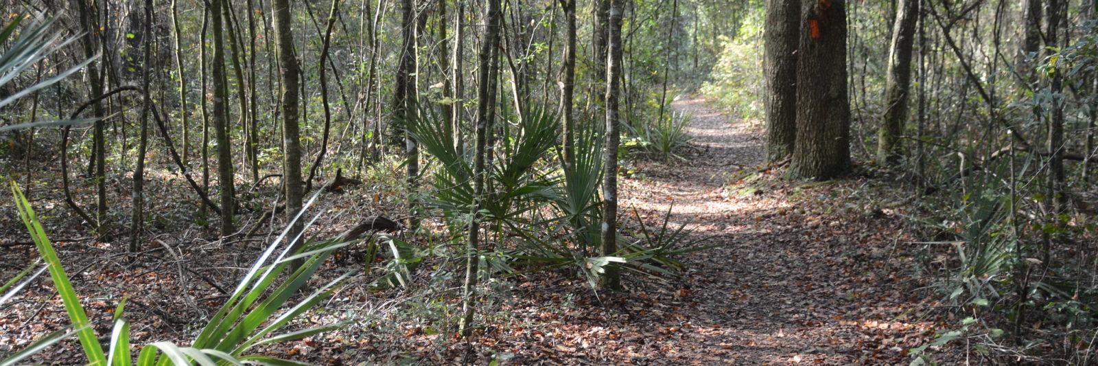 Florida Trail near Land Bridge