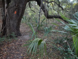 Florida Trail near Land Bridge trailhead