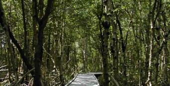 Four Mile Cove Eco Preserve