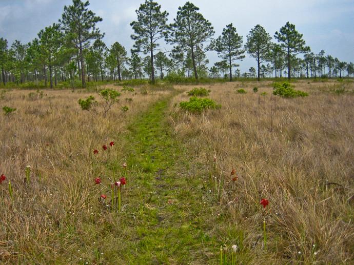Garcon Point Preserve