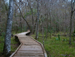 Big Cypress Trail