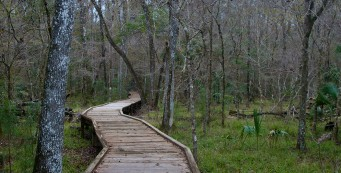Goethe Big Cypress Boardwalk