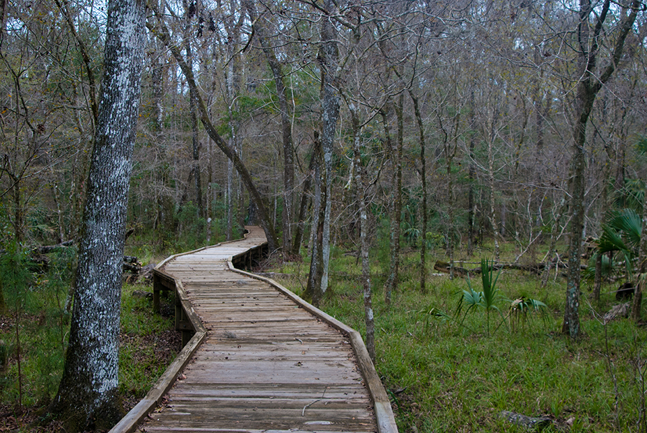 Goethe Big Cypress Boardwalk