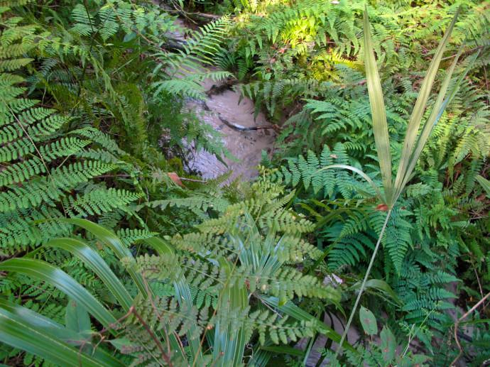 Ridge and Ravine Trails