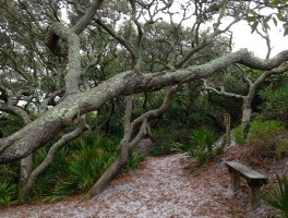 Grayton Beach Nature Trails