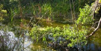 Pond along the Gumbo Limbo Trail