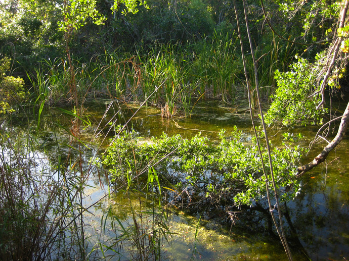 Pond along the Gumbo Limbo Trail