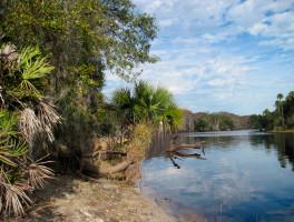 Hickory Bluff Preserve
