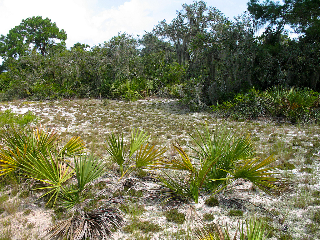Hiking the Lake Wales Ridge Florida Hikes