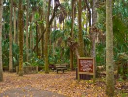 Ancient Hammock Trail