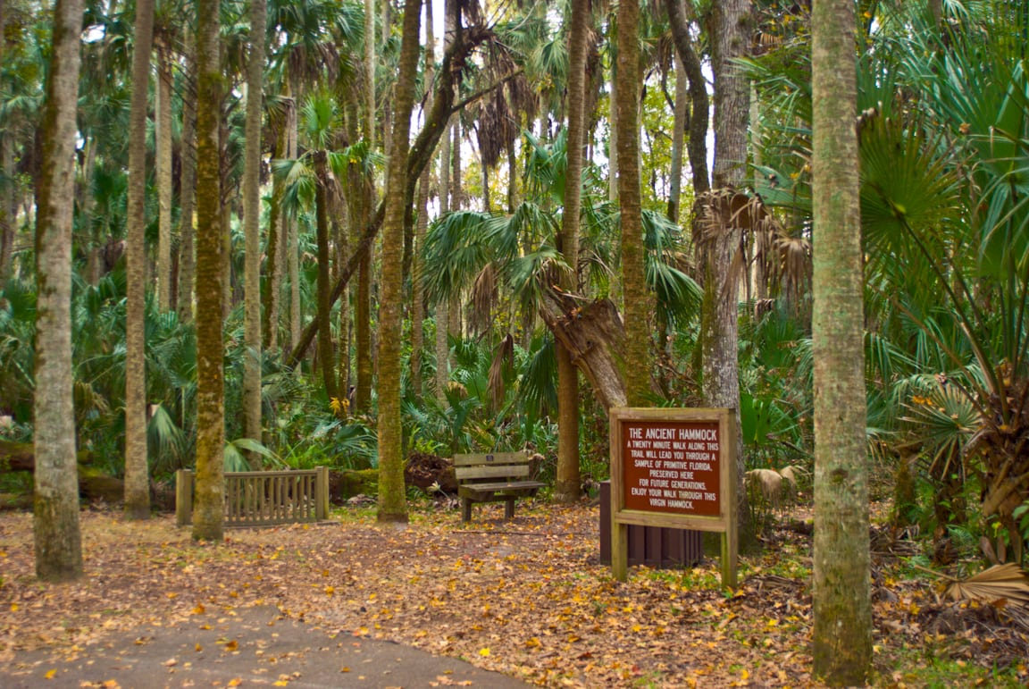 Ancient Hammock Trail Florida Hikes