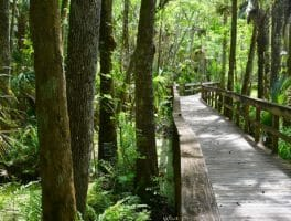 Highlands Hammock Nature Trails