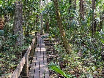 Fern Trail at Highlands Hammock