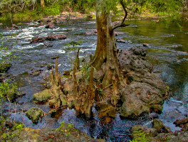 Hillsborough river florida hikes for Hillsborough river fishing