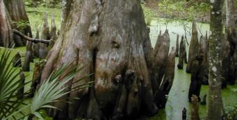 Hog Island Nature Trail