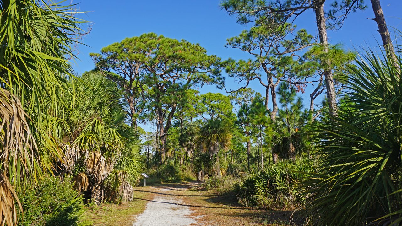 Honeymoon Island Osprey Trail