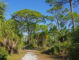 Osprey Trail, Honeymoon Island