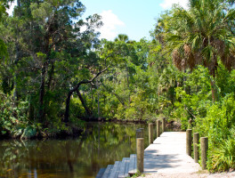 Discovering the wilds of New Port Richey