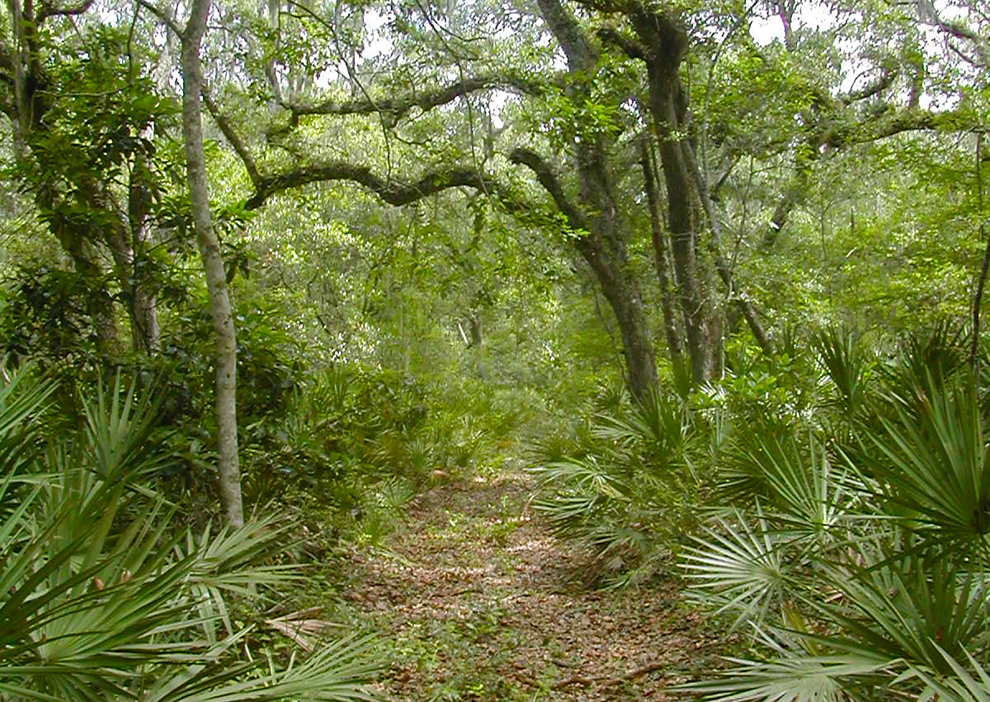 Jones Cut Trail