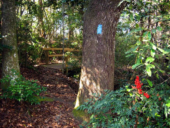 Julia Munroe Woodward Nature Trail