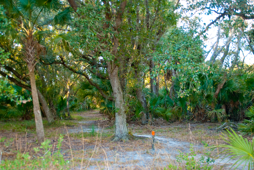 Kilpatrick Hammock Trail