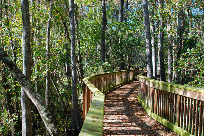 Kirby Storter Boardwalk Florida Hikes