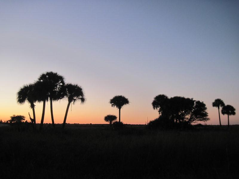 Kissimmee Prairie sunset