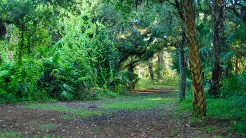 LaBelle Nature Park oak corridor