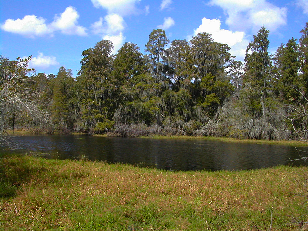 Lettuce Lake Park Florida Hikes