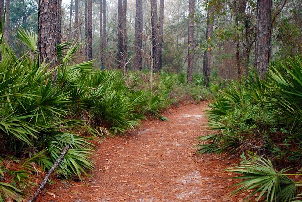 Loftin Nature Trails