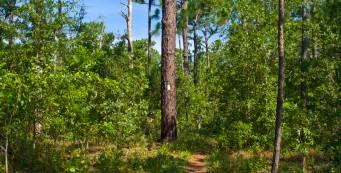 Lower Wekiva Preserve