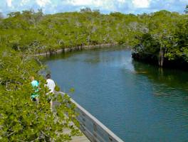 Mangrove Trail