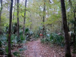 Marshall Swamp Trail