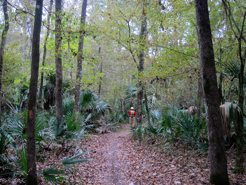 Marshall Swamp Trail