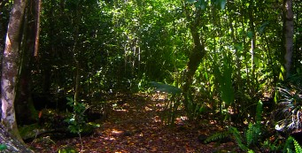 Matheson Hammock Trail