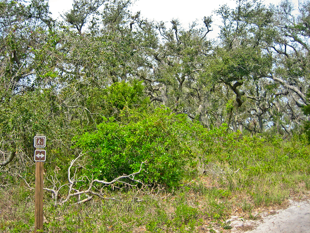 Naval Live Oaks Preserve
