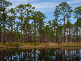 Ochlockonee River State Park Trails