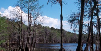 Pine Log State Forest