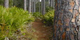 Pine Loop Trail at Faver-Dykes