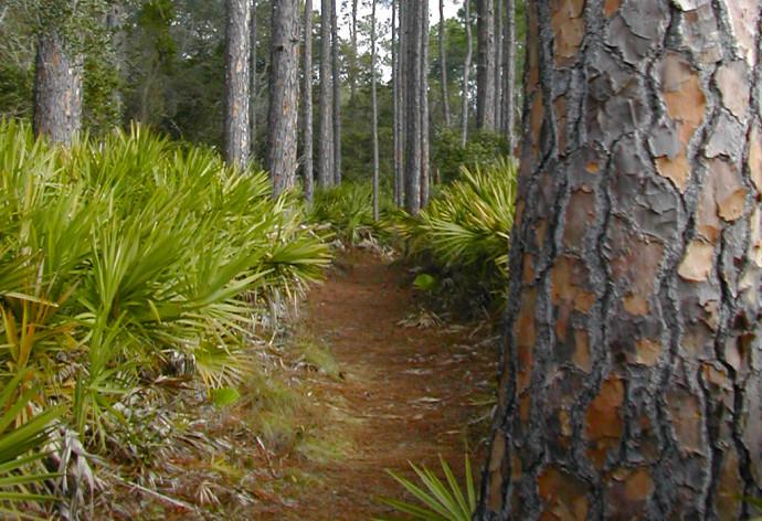 Pine Loop Trail at Faver-Dykes